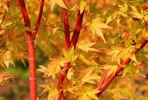 Autumn Beauty / Celebrating the arrival of fall with radiant colors and tips for making the most of the best planting season.