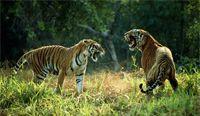 North India Wildlife Tour / Duration 9 Night / 10 Days Destinations Delhi - Sariska - Ranthambore - Jaipur - Bharatpur - Fatehpur Sikri - Agra - Delhi