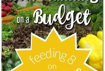 Yum - Budget Meals//Menus