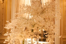 Wedding Venues / by Courtney M.