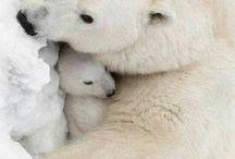 медведи и медвежата