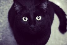 I Love Black Cat <3