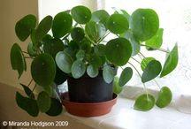Planter til hus og hage