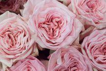Romantic pink chic wedding