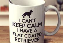 Flatcoated retriever