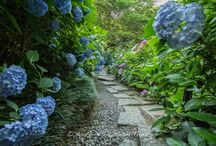 10.000 Ajisai at Yata-Temple in Nara. / Yata-dera Temple (矢田寺) in Yamatokoriyama, Nara-ken, is famous for its many beautiful petals of Hydrangea. There are 60 varieties and some 10.000 plants. About 1.300 years ago Emperor Tenmu (天武天皇-631 – October 1, 686) who was the 40th emperor of Japan, ordered this temple to be built. Yata-dera Temple (矢田寺) is also know for its many izō Bosatsu (地蔵菩薩) statues and boast a pilgrim course along Yata Mountain.