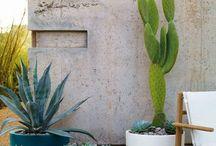 Kaktus , planter
