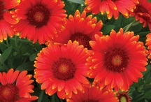 The AMAZING world of plants! / Plants inspire. They remind us that God really does love variety.