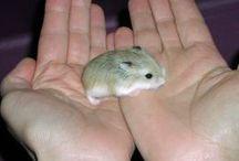 Cute Baby Critters ..... / by Brenda Johnson