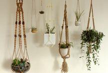 sisäkasvit