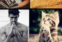gatti ke imitano uomini