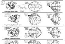 海亀、陸亀、箱亀、沼亀