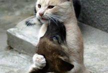 Djur och husdjur