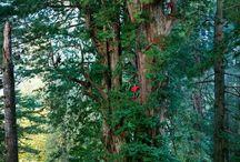 Trees - My soul animal