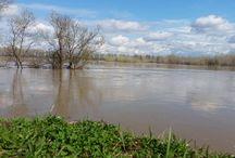разлив реки