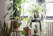 / PLANTS \