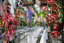 Instalacje z roślin / plants instalations