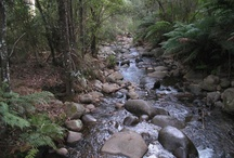 creek/rainforest