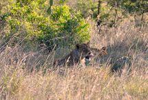 Kenya Safari 2017