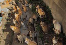 a lots of cat