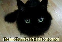 funny and cute cats
