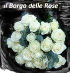 White Roses World / White Roses Pict's