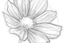 drawings (nature)
