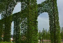 Κήπος / Topiary