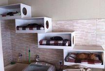 Idee per una casa  a dimensione di micio / Idee, spunti, suggerimenti per armonizzare la nostra casa, il nostro ambiente tenendo conto dei nostri amici felini