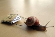 ☆ Snailmail