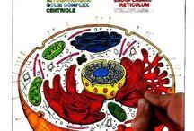 Bologi + biologi ønsker