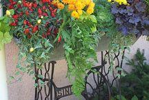 Zahrada a inspirace
