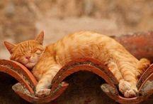 kitty happiness