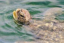 Turtle education