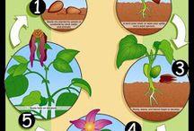 Növények gondozása, nevelése