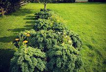 hagen garden