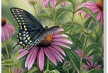 Рисунки - Бабочки..