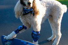 skateboarding dogs / by Annie Hammer