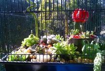 My Cactus/Succulant Gardens