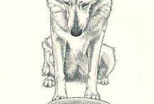 Huskies <3 / by Alyssa Pruder