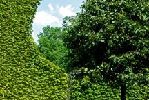 Hedge cutting ideas