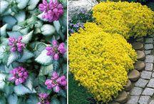 nenáročné kvety