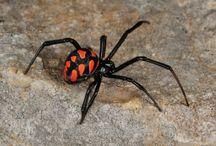 Spider way