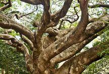 Träd/trä. (Wood)