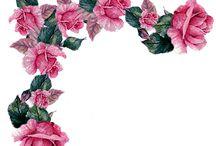 fiori png