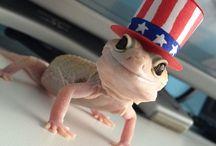 my new leopard gecko