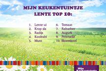 Lente top 10