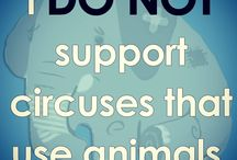 Fight for Animals.. end animal cruelty