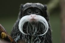 MOvember Mustaches! / We're celebrating MOvember with some of our favorite mustaches found in wildlife! #Movember #Mustache #Animals #Wildlife #Silly #Fun #Cute #Wildlife #JuniorExplorers