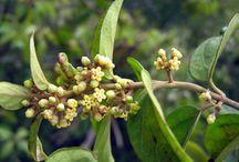 лекарственные растния